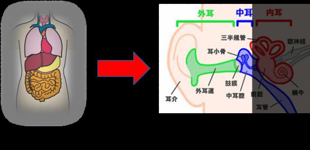 突発性難聴の仕組み